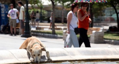 Καύσωνες και Ξηρασία για την ΑΘΗΝΑ   Τεράστια αύξηση σε καύσωνες και ξηρασίες στο μέλλον   Athens